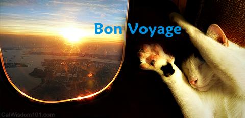 bon voyage cat meme
