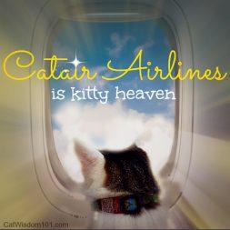 Cat-airline travel-kitty heaven-humor-Layla Morgan Wilde