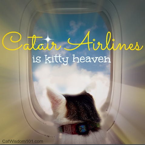 Cat-airline travel-kitty heaven-humor-Layla Morgan Wilde