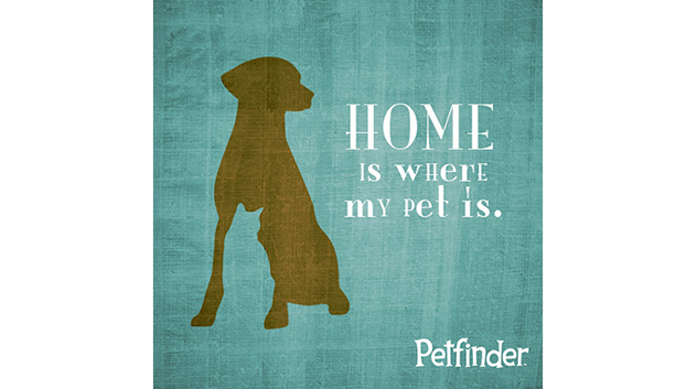Home Is Where My Pet Is