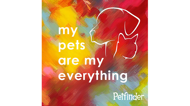 My Pets Are My Everything