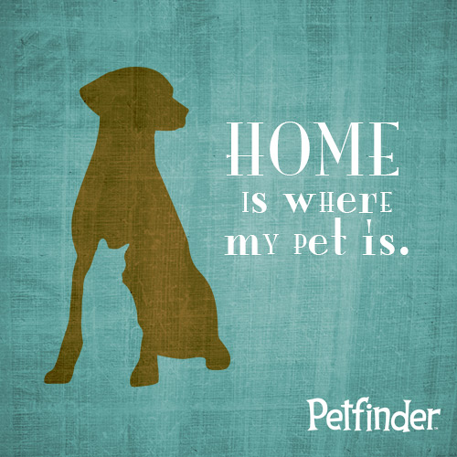 home is where my pet is logo