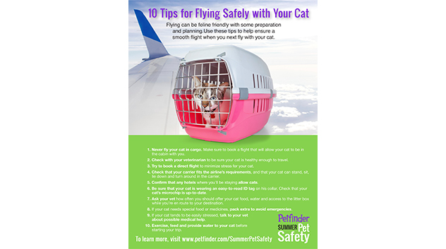 10 Tips to Fly Safely with Your Cat