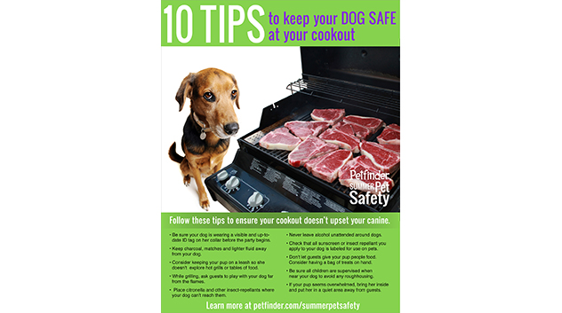 Keep Your Dog Safe at a Cookout