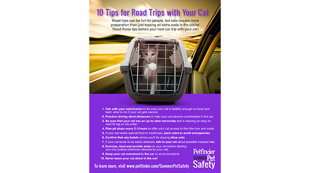 10 Tips for Road Trips with Your Cat