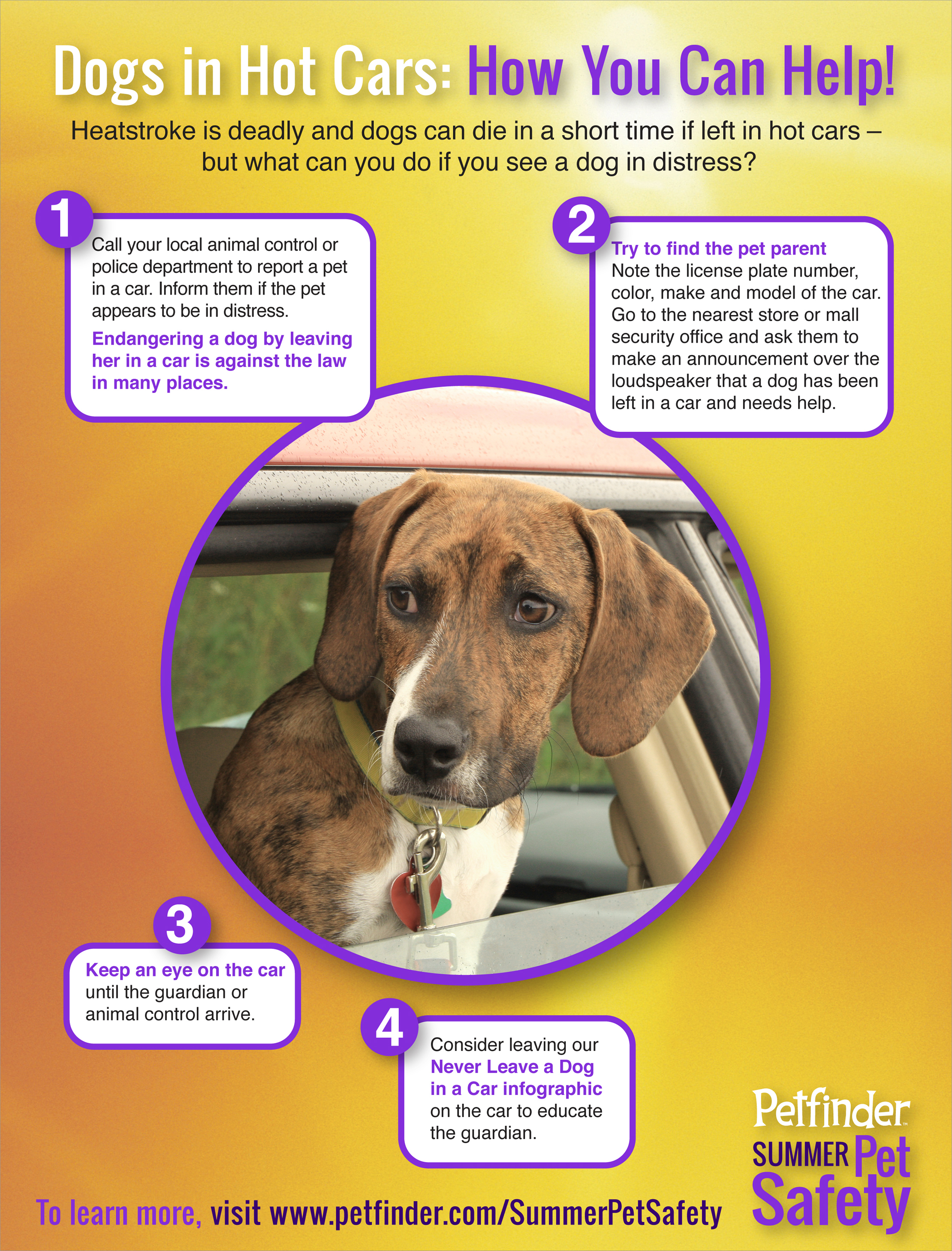 Gallery  4 Easy Steps To Help Dogs In Cars