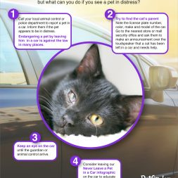 heat stroke in cats poster