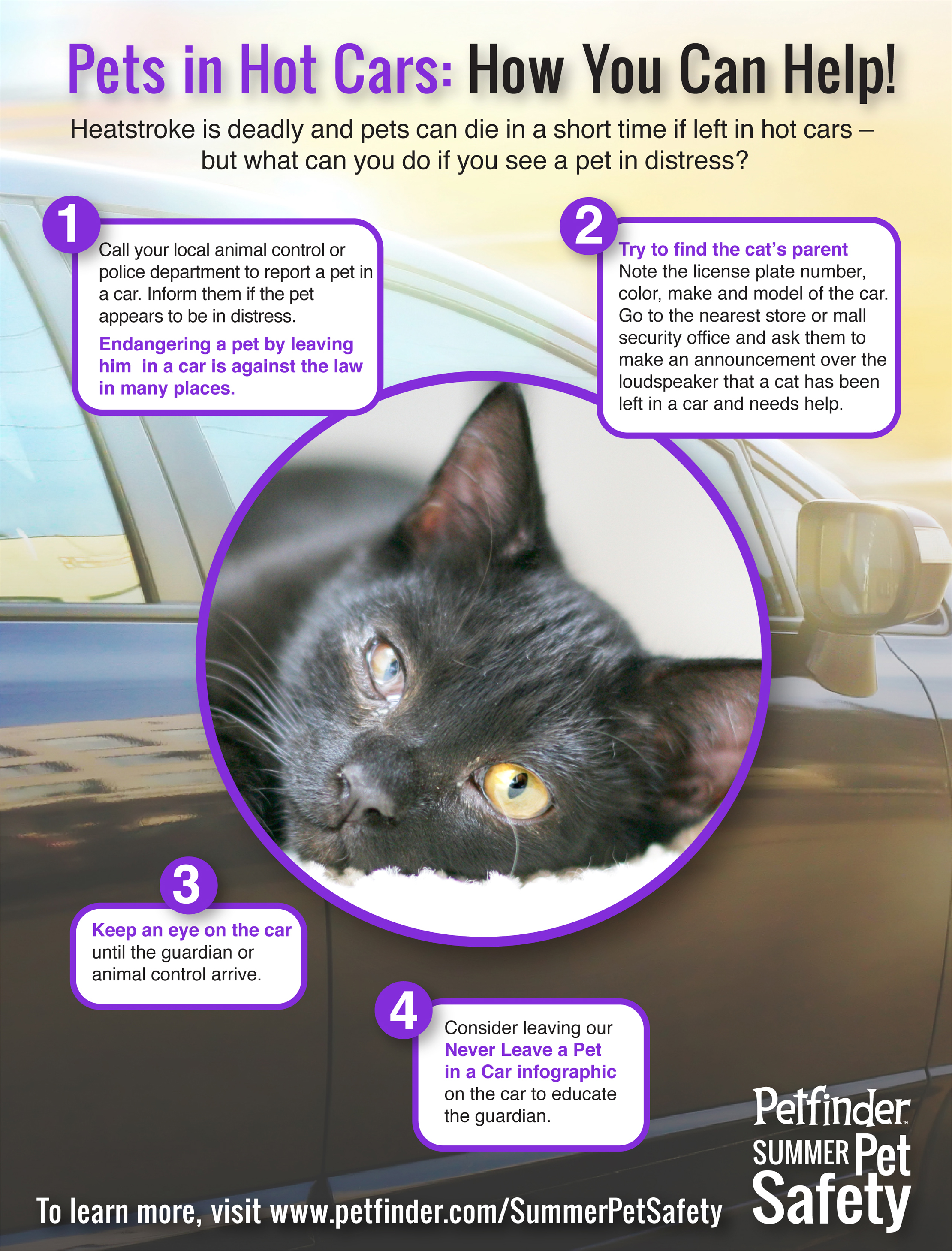 heat stroke in cats poster