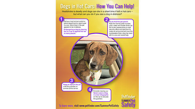 How You Can Help Dogs in Hot Cars