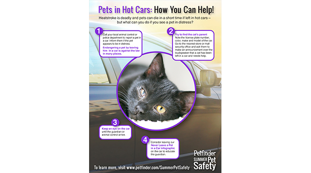 4 Steps to Help Pets in Cars