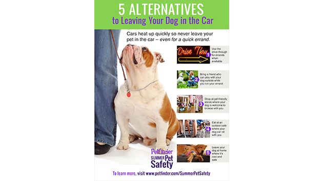 5 Alternatives to Leaving Your Dog in the Car