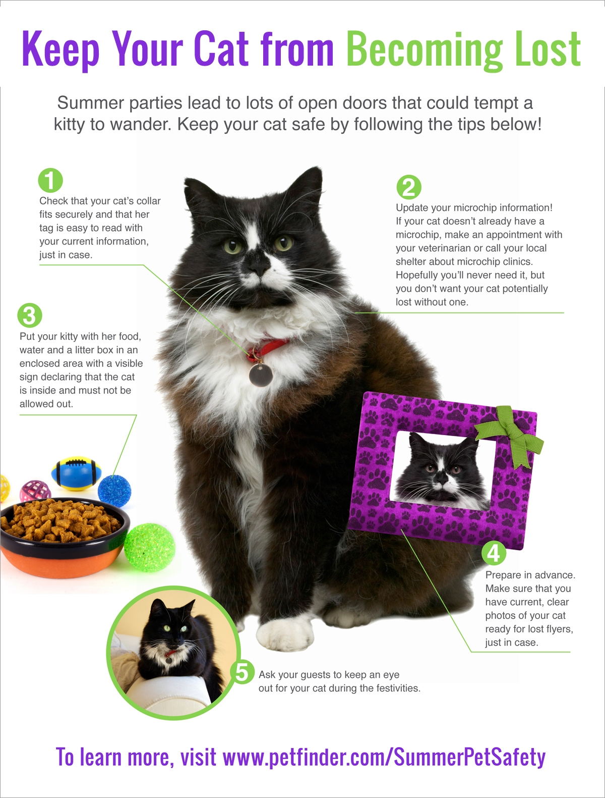 5-tips-to-keep-cat-from-becoming-lost