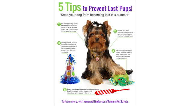 5 Tips to Prevent Lost Pups