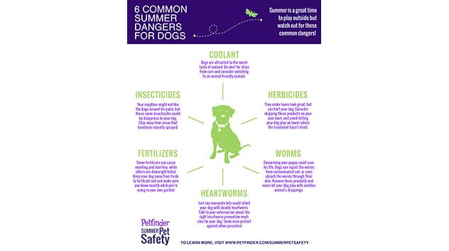6 Common Summer Dangers