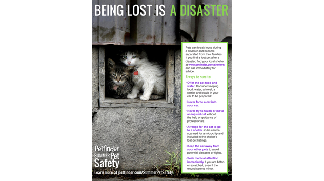 Help lost cats after disasters