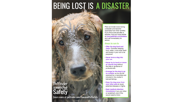 Help lost dogs after disasters