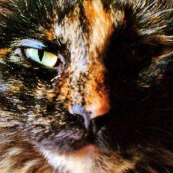 Cocoabean the Tortoiseshell cat