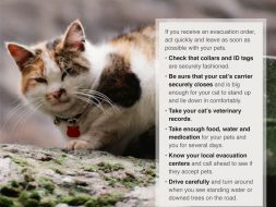 hurricane tips for pets