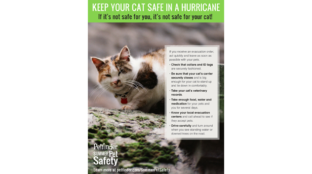 Keep your cat safe in a hurricane
