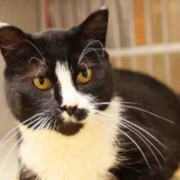black and white cat in a shelter