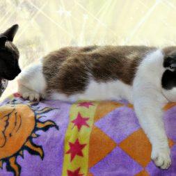 cats-summer-beach-sun