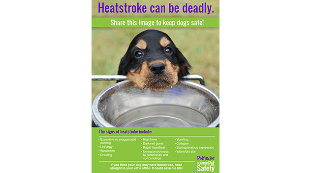 Heatstroke is deadly for dogs