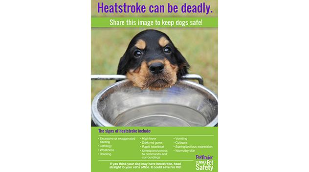 Heatstroke is deadly for dogs