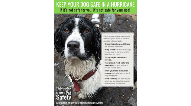 Keep your dog safe in a hurricane