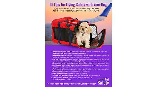 10 TIps for Flying With Your Dog