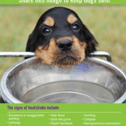 signs of heat stroke in dogs