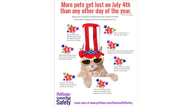 Keep Your Cat Safe on the Fourth of July