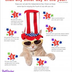 4th of july safety tips for cats