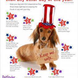 keep your dog safe during forth of july