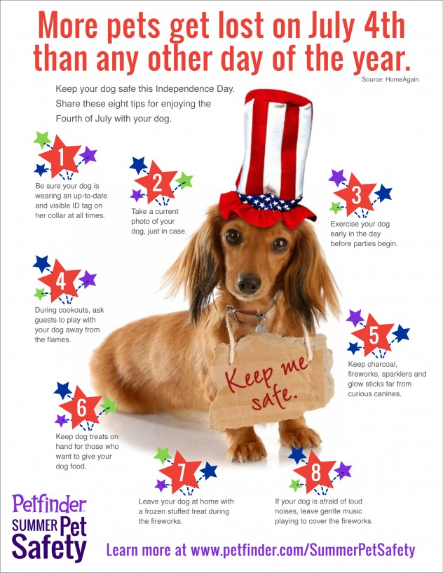 Infographic Fourth Of July Safety For Dogs Petfinder