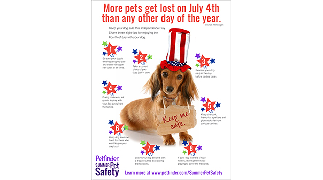 Keep Your Dog Safe on the Fourth of July
