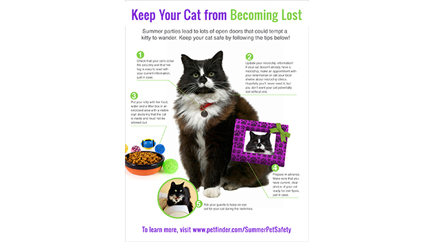 Keep Your Cat from Becoming Lost