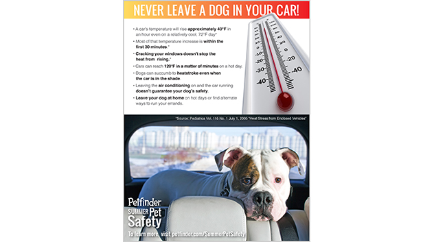 Never Leave Your Dog in a Car