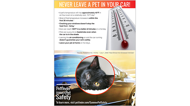 Never Leave a Pet in Your Car