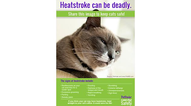 Learn the Signs of Heatstroke in Cats