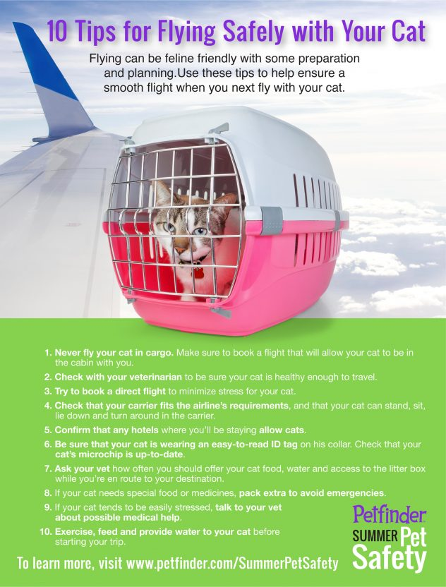 safety tips for flying with your cat
