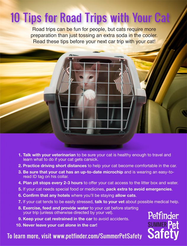 safety tips for roadtrips with your cat