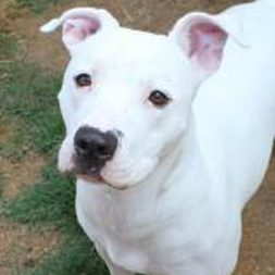 Maybelline at Bama Bully Rescue