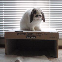 Mario on box