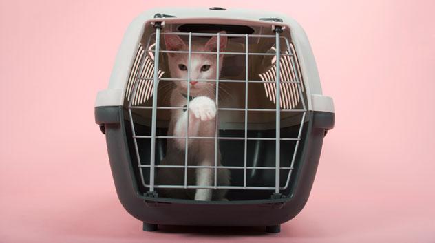 cat-crate79168093_632x353