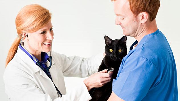 cat-vet-162384815_632x353