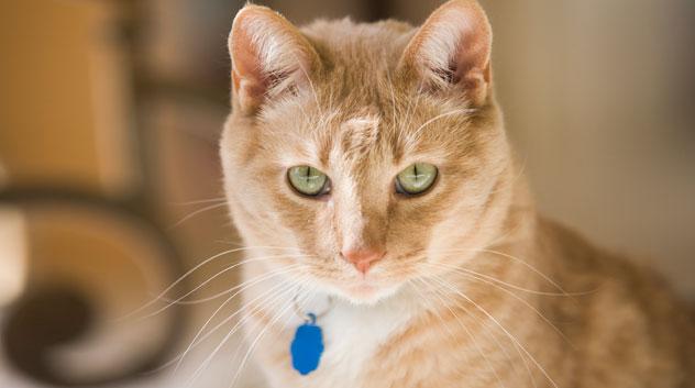 orange-cat-14044757_632x353