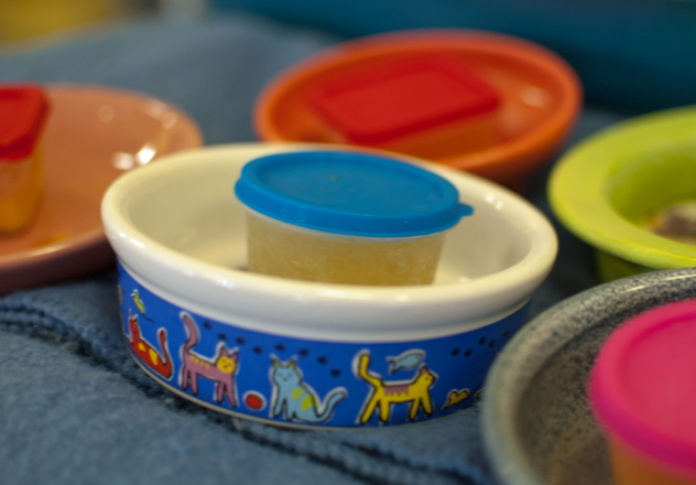 pupsicle container in pet dish