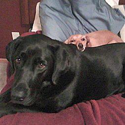 Poco, Deja's companion