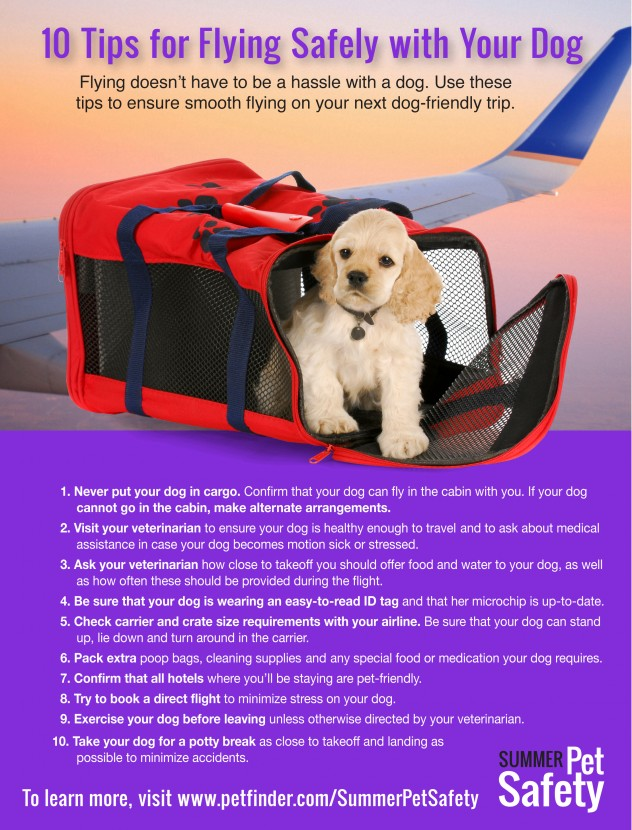 10 Tips to Fly Safely with Your Dog
