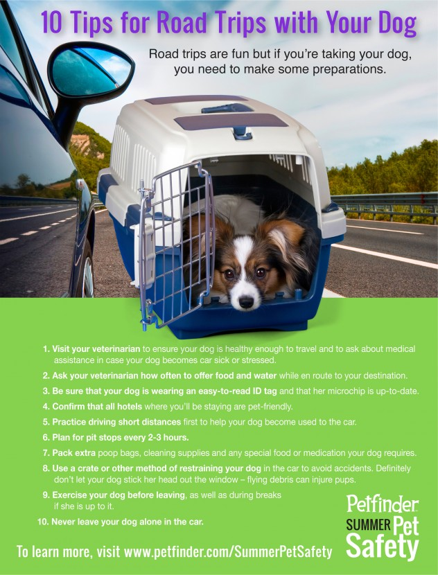 10 Tips for Road Trips with Your Dog